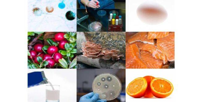 Desafios da logística na indústria de alimentos e bebidas