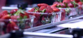 Novas regras para a rastreabilidade na indústria de alimentos e bebidas