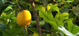 Sustentabilidade na indústria de alimentos e bebidas