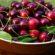 SBC mira um dos mercados mundiais que mais crescem em certificação de Boas Práticas na produção de frutas
