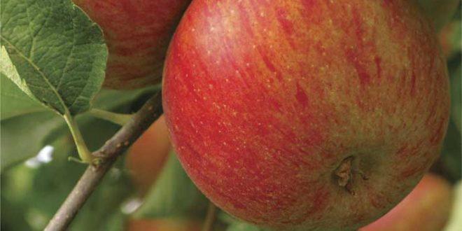 Exportação de frutas cresce 20% e incentiva ainda mais o mercado brasileiro