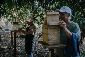 Cervejaria Colorado cria movimento para beneficiar 4 milhões de abelhas nativas