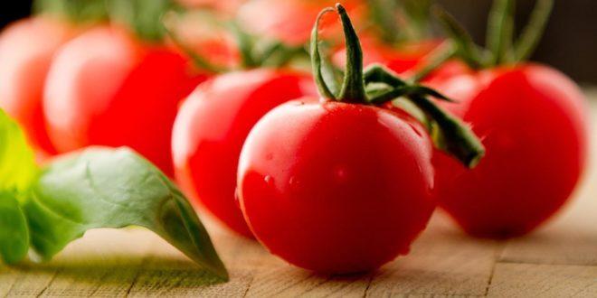 Cepêra colhe 30 milhões de quilos de tomate por safra e projeta um crescimento de 20% em 2021